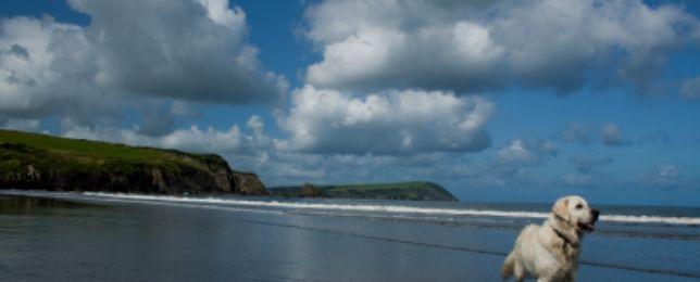 Dog friendly cottages North Wales