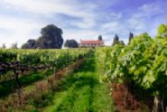 Tour the vineyards of England