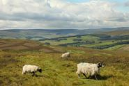 Weardale holiday cottages